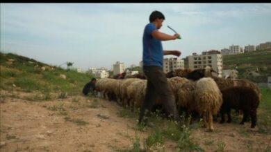 Photo of المنايح اول فيلم وثائقي اردني يرشح لتقييم عالمي